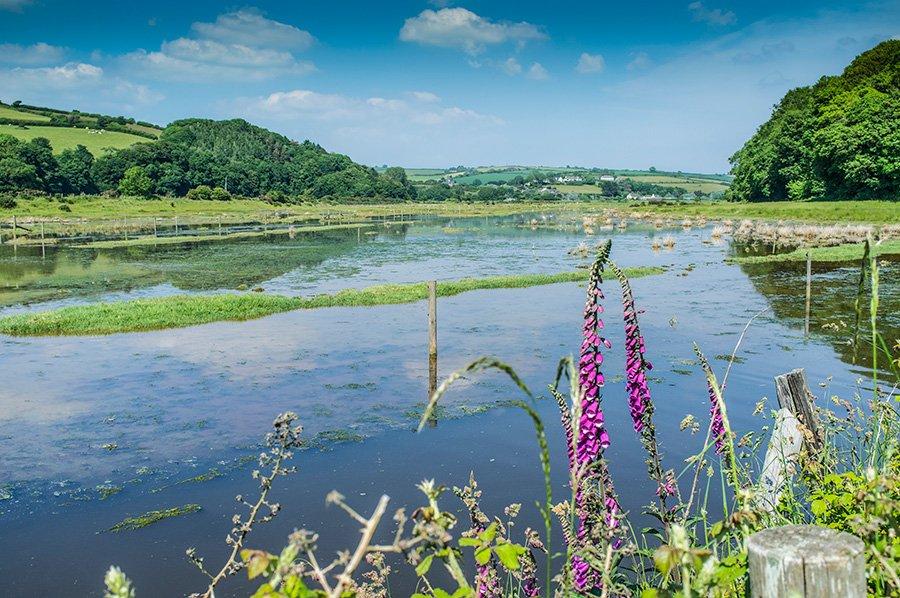 The flooded marsh