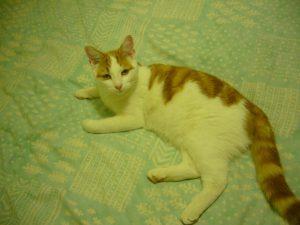 Missing cat - Fudge